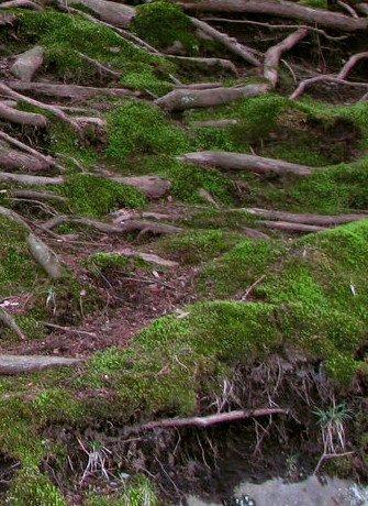 roots1 image sea_youhere 2.0, virtual residency SEA Foundation Tilburg