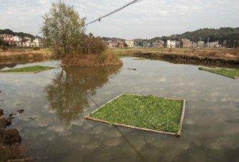 Shapes of Rural Life, Peng Zhang, 2019, WARP #3
