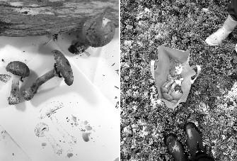 Tessa Zettel #sea_youhere 2.0 artist Mushroom Trading Post, 2017